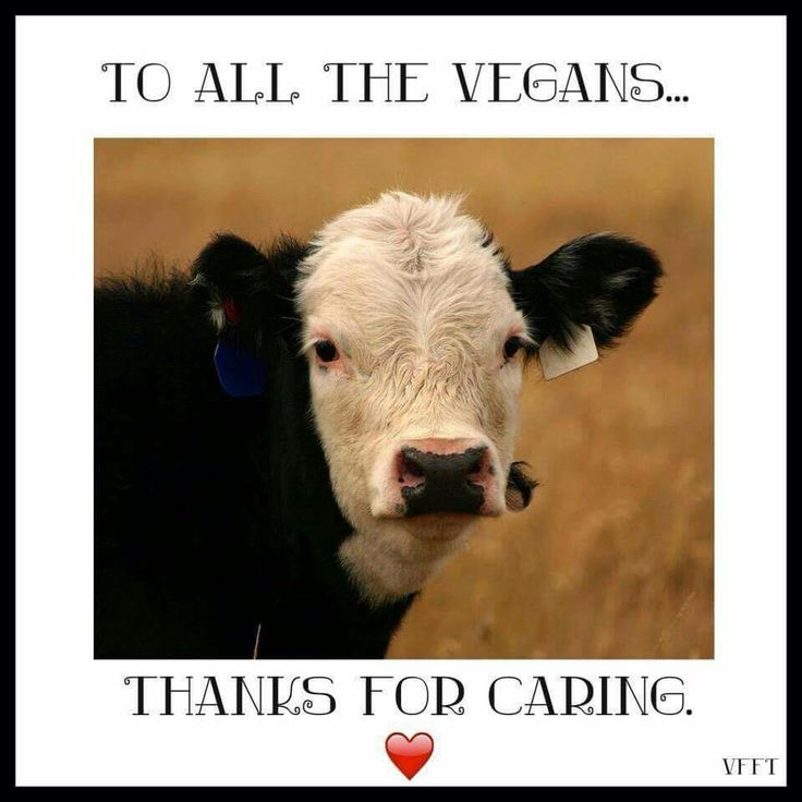to all vegans: thanks for caring