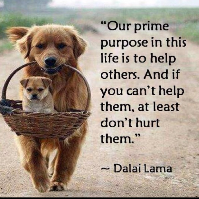 .Inspiration, Quotes, Dalai Lama, Be Kind, Well Said, So True, Wise Words, Animal