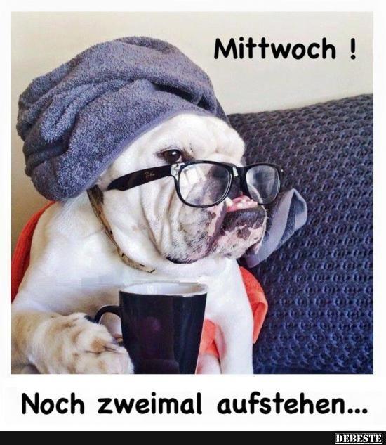 Mittwoch! | Lustige Bilder, Sprüche, Witze, echt lustig