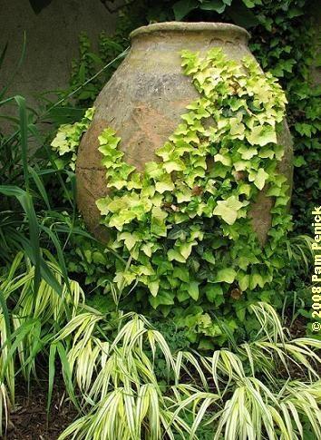 grow ivy type creeper on the pot itself...