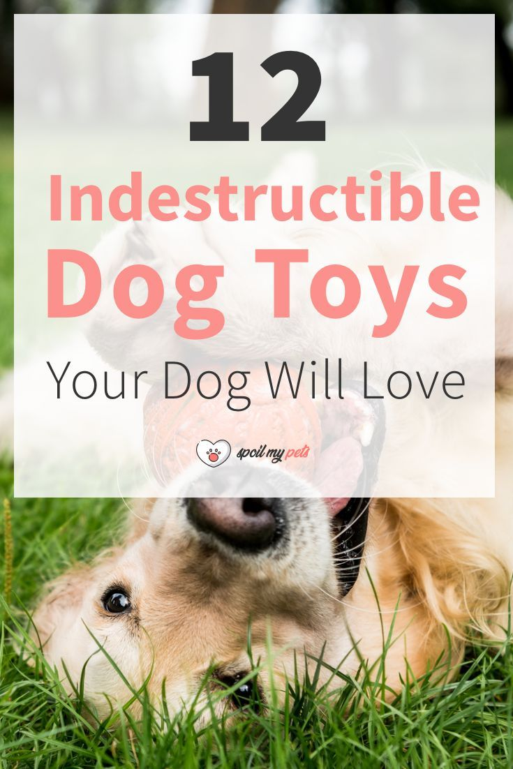 12 Most Indestructible Dog Toys Your Dog Will Love Dog Toys Dog