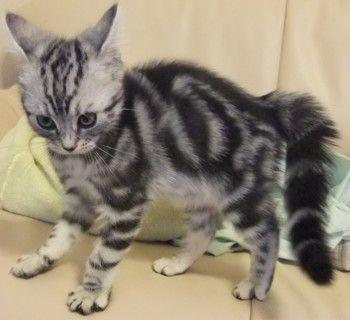 猫の仕草でわかる猫の気持ち:③猫の威嚇