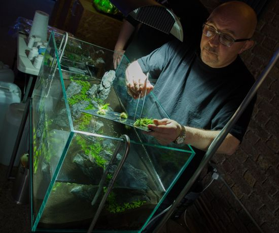 Aquascaping Magazine: 78 Best Images About Aquascaping: Nano Aquariums On