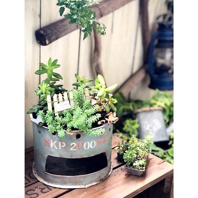 ・ ・ おはようございます。 グリーンと グリーンある空間が好きなRIKAです。 ・ 今日は、雨。 ベランダガーデンも しっとりしています。 ・ ドラム缶リメイクの缶に植えこんだ セダムのモリモリ加減が ちょうどいい感じ♪ 可愛いです💛 ・ ・ #グリーンのある暮らし #植物のある暮らし #緑のある暮らし #観葉植物のある暮らし #花のある生活 #植物と暮らす #庭のある暮らし #多肉植物のある暮らし #マイホーム  #みどりの雑貨屋 #観葉植物 #フェイクグリーン #インテリアグリーン #マイガーデン #ベランダガーデン #ベランダガーデニング #バルコニスト#ガーデニング #ガーデン #ワイヤークラフト #ドラム缶  #リメ缶 #gardening #garden #キャベツボックス #ハンドメイド #dcm多肉植物 #多肉植物 #多肉植物寄せ植え  #plantlife