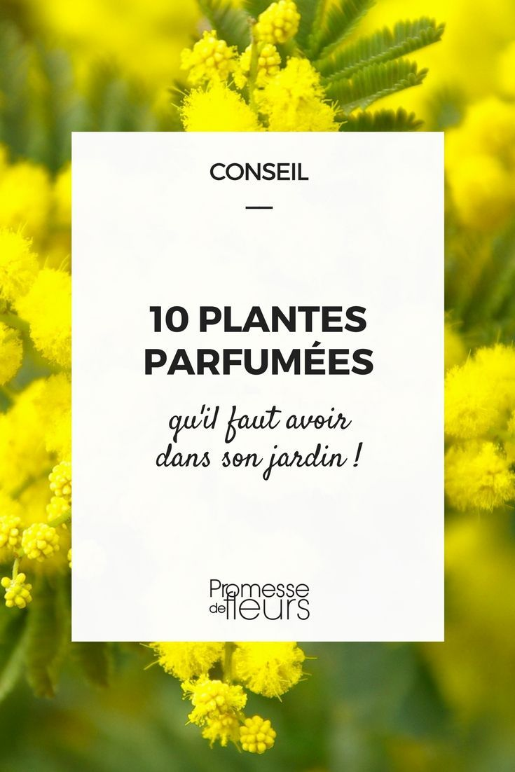 10 plantes à fleurs odorantes et parfumées | Jardins, Fleurs ...
