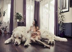 Pies, Kobieta, W, Szlafroku, Z, Kubkiem, Rośliny, Salon