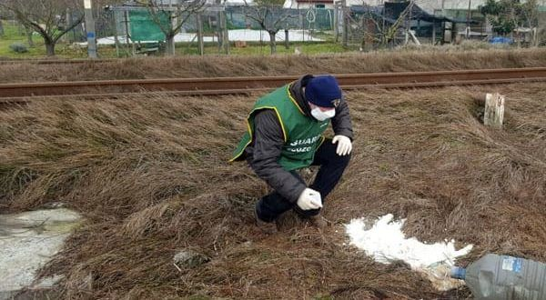 Pisa: cane morto coperto di calce trovato lungo la ferrovia