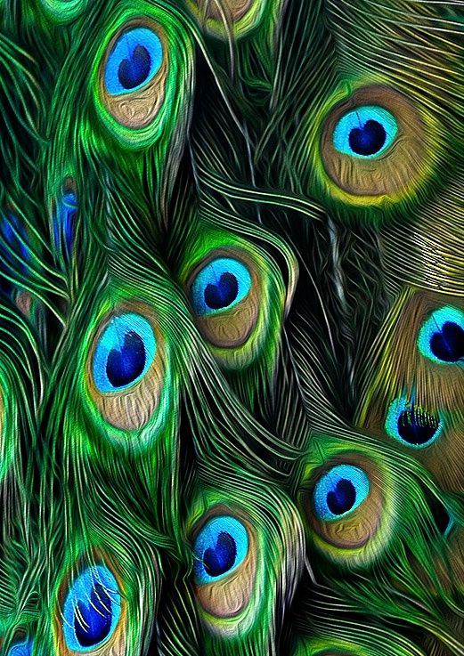The greens and how full the feathers are... Love it