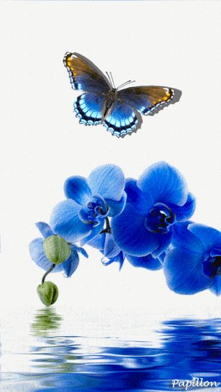 Orchidée bleue avec papillon