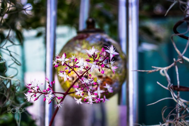 Flower chimes - Flowers and chimes in the garden.