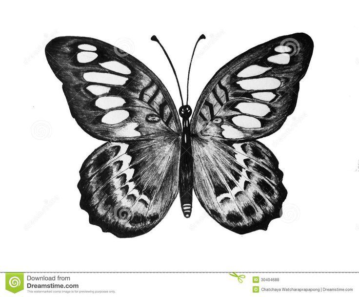 Disegni farfalle a matita cerca con google disegni for Disegni di fiori a matita