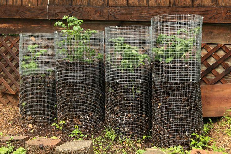 """Inspirée de la permaculture, la """"tour de patates"""" est une technique qui permet aux jardiniers urbains d'atteindre des records de rendement."""