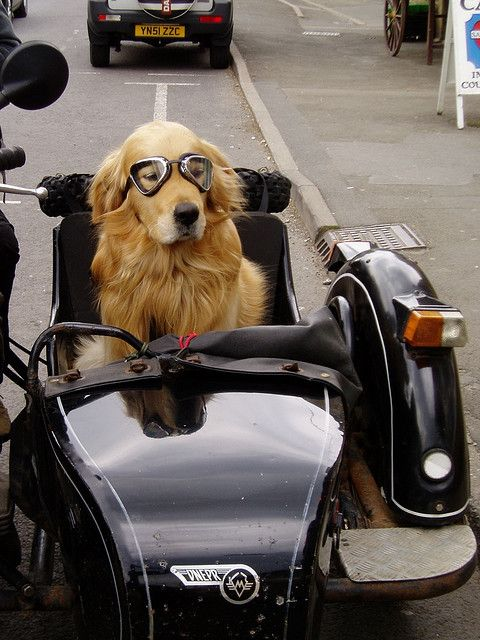 Canine Sidecar... I should get a bike when I'm done carpooling the kids in a few more years, my lab would LOVE this!