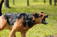 How to Stop Dog Aggression - tips from a professional dog trainerhttp://peoplelovinganimals.com/how-to-stop-dog-aggression-tips-from-a-professional-dog-trainer