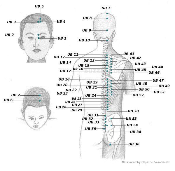 Acupressure Points Chart | Acupuncture Meridians