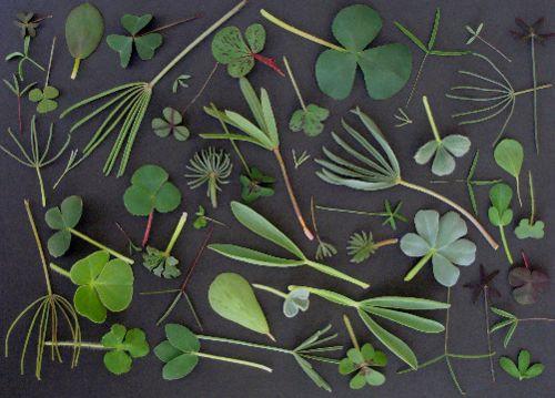 Sandberg Tapeten Waldemar : Pin by Zo? Landry on patterns Pinterest Spring Green, Plants and