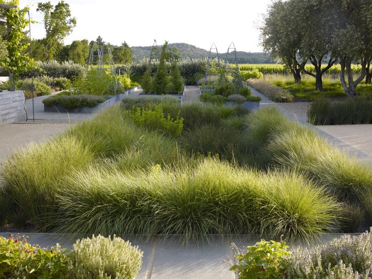 ASLA 2013 Professional Awards |Medlock Ames Tasting Room and Alexander Valley Bar | Nelson Byrd Woltz Landscape Architects