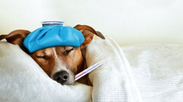 Can you give dogs human medication — safely? Here's what we found out about playing doctor to your pooch.