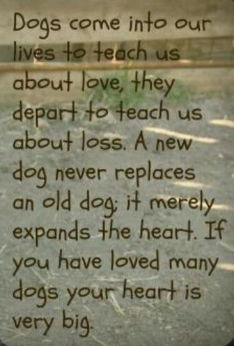 Dogs come into our lives.