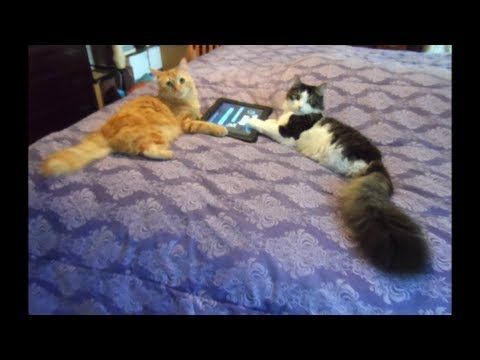 1000 Images About Anakin Our Two Legged Cat On Pinterest