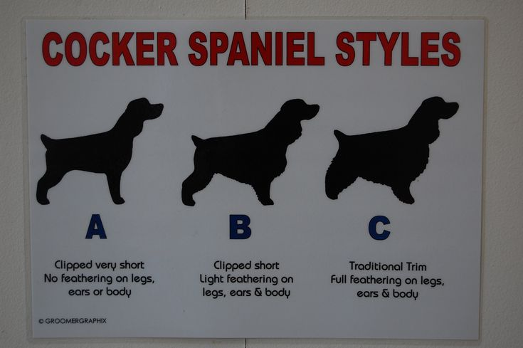 Good signage to have for future kennel, if I decide to do grooming