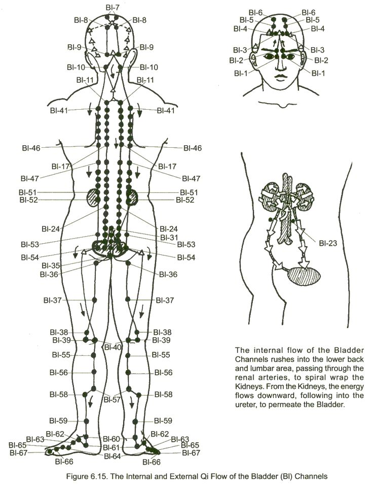 126 best meridian charts images on pinterest massage acupuncture downward facing dog and the bladder meridian why it feels and does good ccuart Image collections