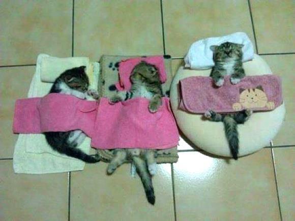 Good Night! #Sleepy #kittens tucked away and already in #dream land. http://kittyflix.com/