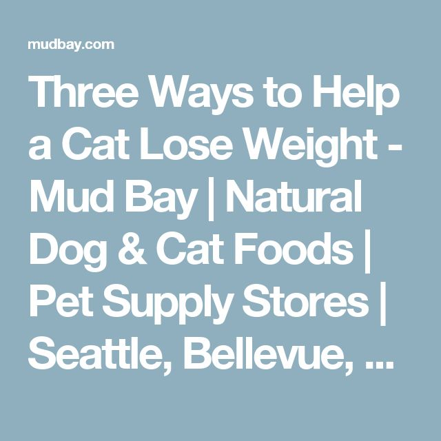 Three Ways to Help a Cat Lose Weight - Mud Bay | Natural Dog & Cat Foods | Pet Supply Stores | Seattle, Bellevue, Tacoma, Portland - for Healthy Dogs and Cats - Mud Bay for Healthy Dogs and Cats