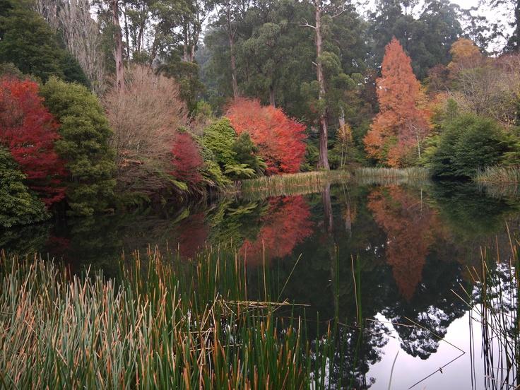 Rhodedendron Gardens, Olinda