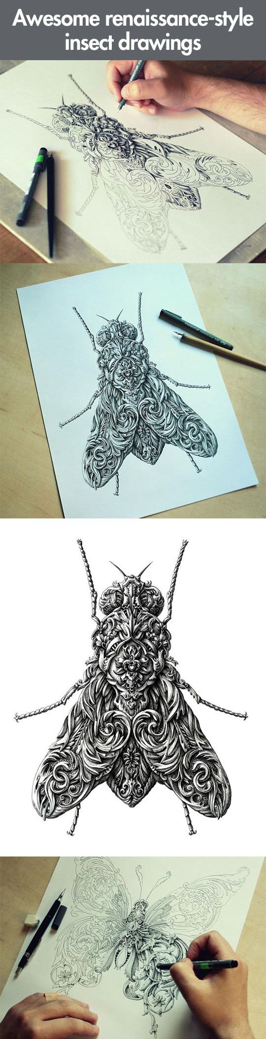 Renaissance-style insect drawings… filling the space with artificial details instead of drawing the object as it appears.