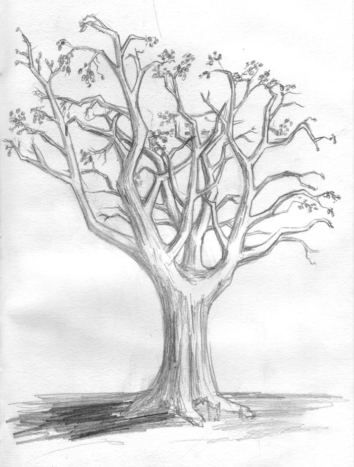 Fall tree sketches images galleries for Best tree drawing