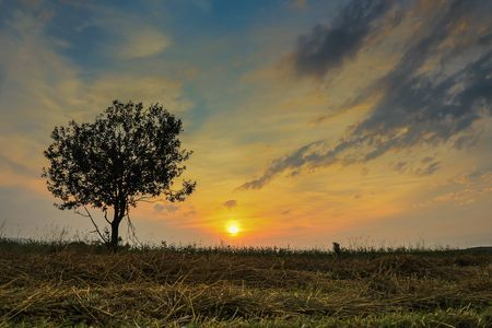 Lonely tree at sunset Photo by Nicoara Mihai -- National Geographic Your Shot