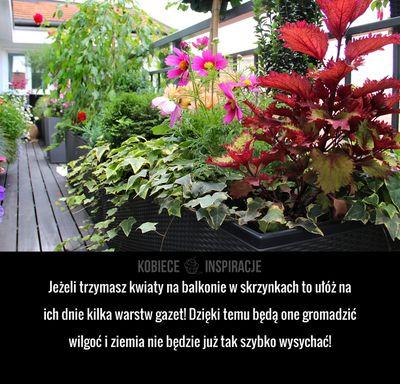 Jeżeli trzymasz kwiaty na balkonie w skrzynkach to ułóż na ich dnie kilka warstw gazet! Dzięki temu będą one gromadzić ...