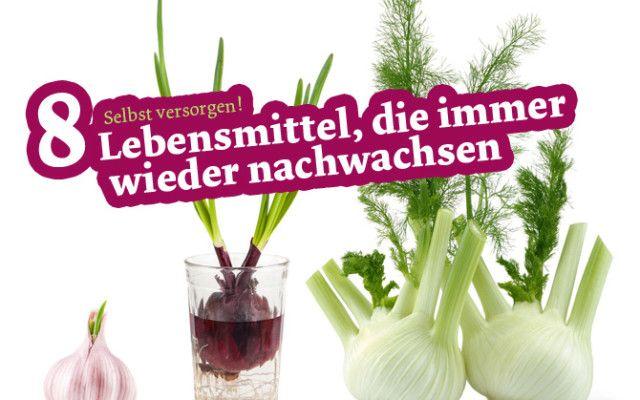 8 Lebensmittel, die immer wieder nachwachsen | Utopia.de