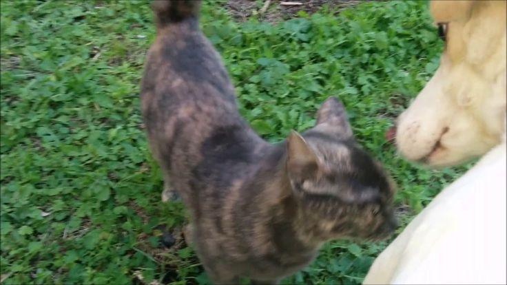 Μία βόλτα με την γάτα και τον σκύλο μου.Δεν σου αρέσουν οι γάτες?Γιατί τ...