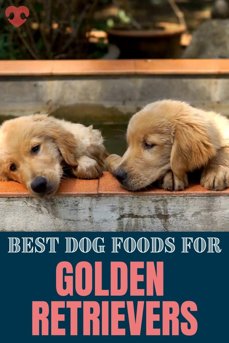Best dog foods for golden retrievers puppies adults