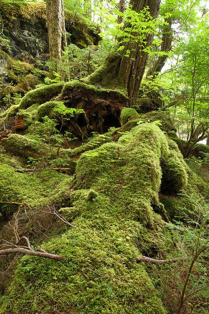 Temperate Rainforest,Tongass National Forest,Sitka, Alaska