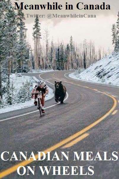 This is so funny. Saw on the internet, 4 bears chasing people away from their home. Only in Canada, so true.