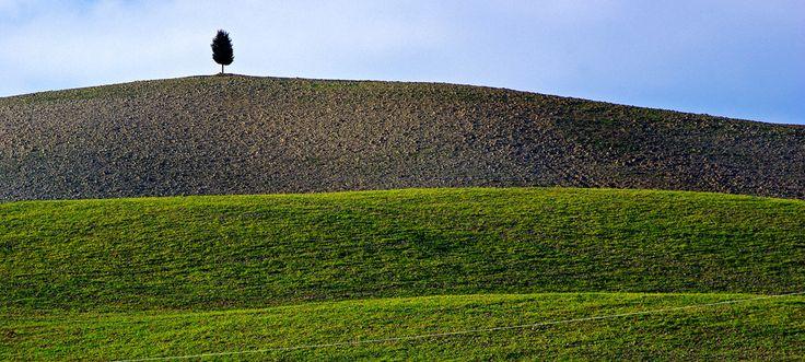 Il cipresso sulla collina (Val d'Orcia). Foto di Enzo Rettori su http://www.flickr.com/photos/enzo_rettori/5441638928