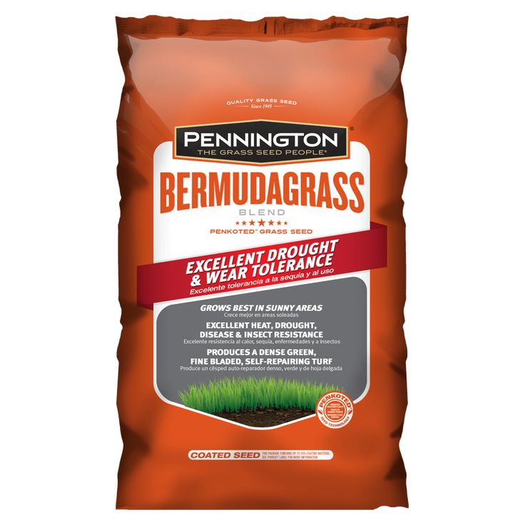 How to Overseed or Reseed Your Lawn Bermuda grass seed