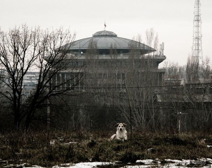 Rectorat Building, Politehnica University of Bucharest, Romania. Built 1963-69. Architects: Octav Doicescu with Stephen Lungu-Perianu, Costin Paet, Peter Swoboda. Photo by Dumitru Rusu. Image © BACU