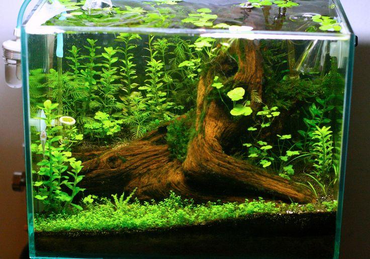 Paintball, Tree stumps and Planted aquarium on Pinterest