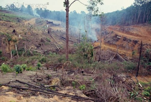 Palm Oil Is In Everything -- And It's Destroying Southeast Asia's Forests