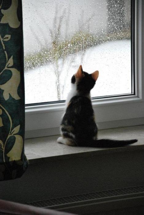 sweet kitten watching a rainy day: Snow Fall, Pet, Kittens, Go Outside, White Stuff, Window Seats, Rain, Cat Lady, Animal
