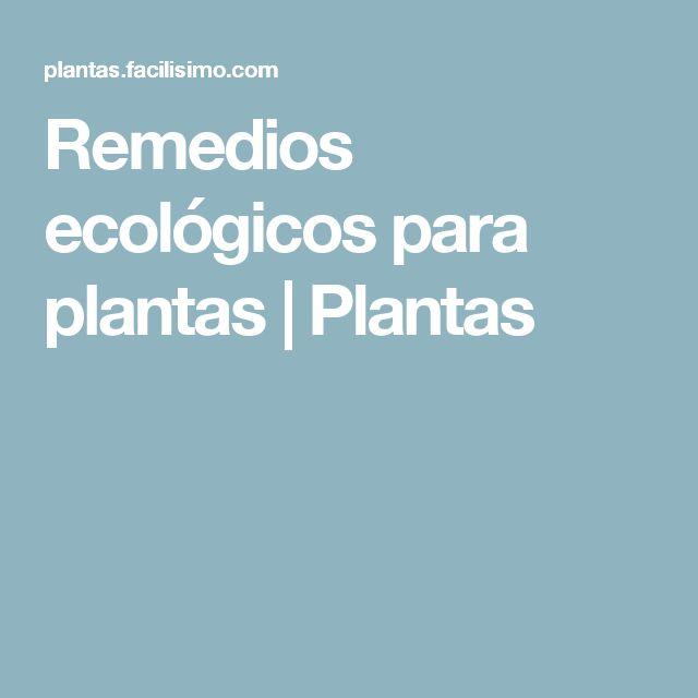 Remedios ecológicos para plantas | Plantas