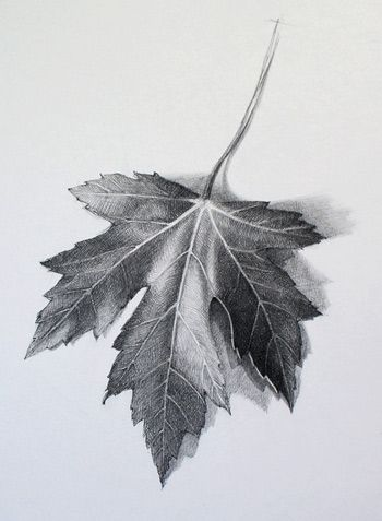 """Watch """"How to Draw a Leaf"""" Video Lesson to discover all you need to know How to Draw a Leaf. Drawing Academy presents in-depth info on How to Draw a Leaf"""