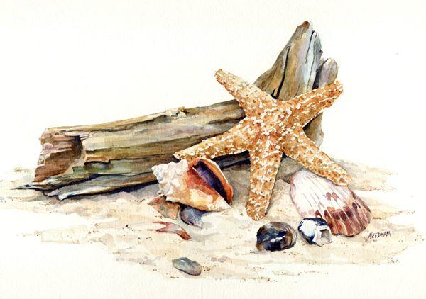 .seashells