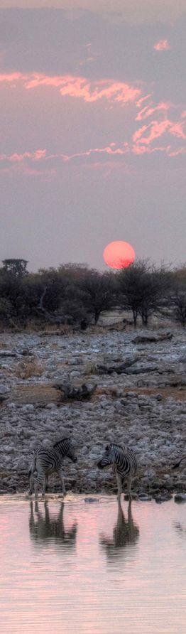 Zebra sunset at Etosha National Park in northwestern Namibia.