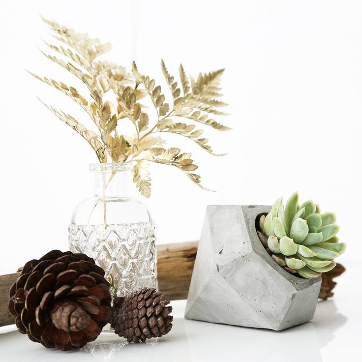 Still thinking of some presents for this festive season?  How about our diamond shaped pot plants!