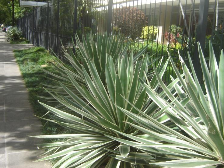 81 best plantas y jardines images on pinterest garden for Jardin vertical mercadolibre